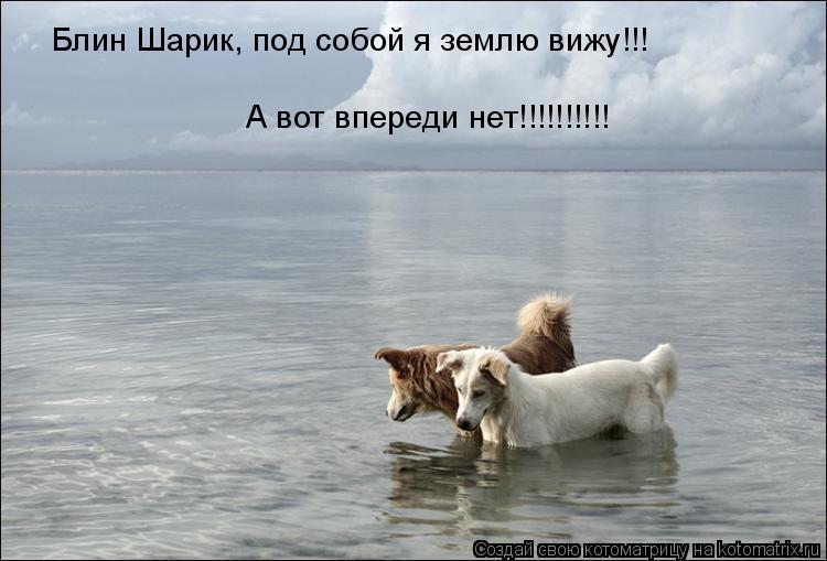 Котоматрица: Блин Шарик, под собой я землю вижу!!! А вот впереди нет!!!!!!!!!!