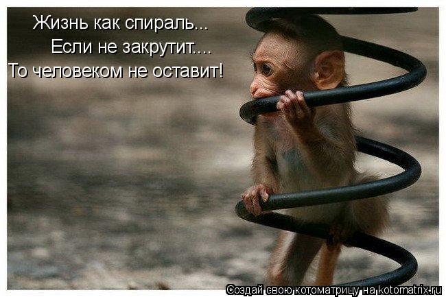 Котоматрица: Жизнь как спираль... Если не закрутит.... То человеком не оставит!