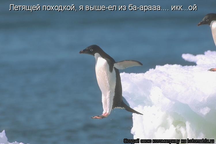 Котоматрица: Летящей походкой, я выше-ел из ба-арааа.... икк...ой