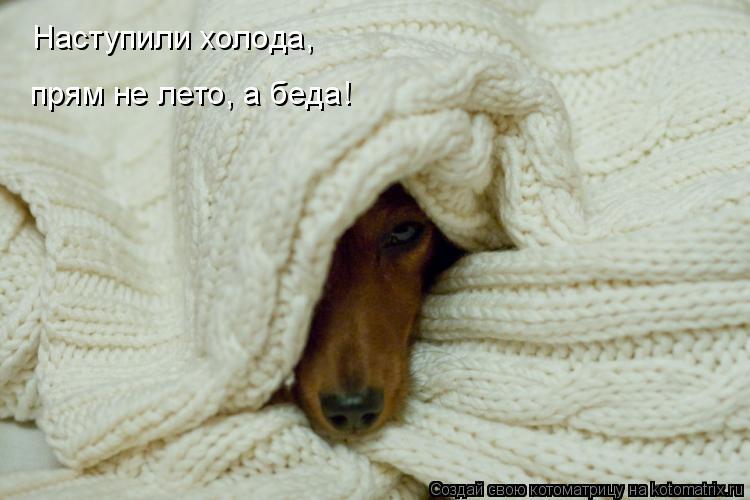 Котоматрица: Наступили холода, прям не лето, а беда!