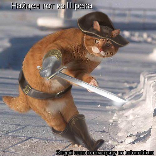 Котоматрица: Найден кот из Шрека