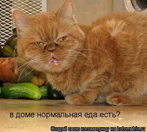 Котоматрица: в доме нормальная еда есть?