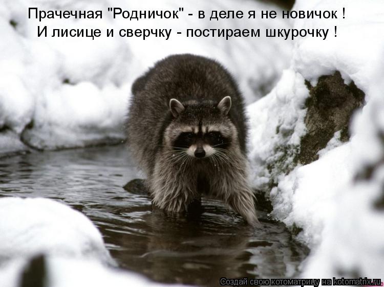 """Котоматрица: И лисице и сверчку - постираем шкурочку ! Прачечная """"Родничок"""" - в деле я не новичок !"""