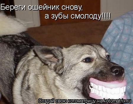 Котоматрица: Береги ошейник снову, а зубы смолоду!!!!
