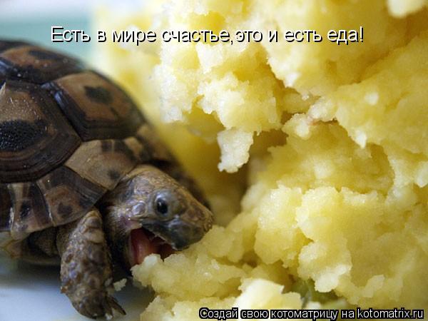 Котоматрица: Есть в мире счастье,это и есть еда!