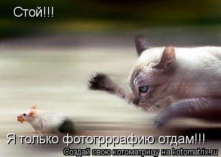 Котоматрица: Стой!!! Я только фотогрррафию отдам!!!
