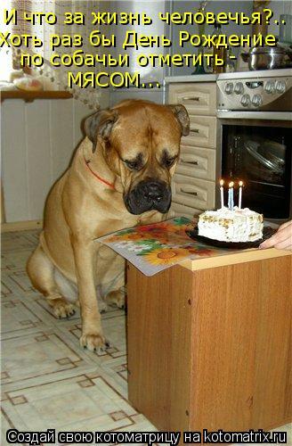 Котоматрица: И что за жизнь человечья?.. Хоть раз бы День Рождение  по собачьи отметить МЯСОМ... -