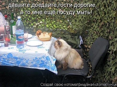 Котоматрица: давайте доедайте,гости дорогие а то мне ещё посуду мыть! ,