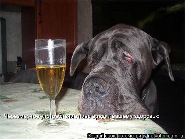 Котоматрица: Черезмерное употребление пива вредит вашему здоровью