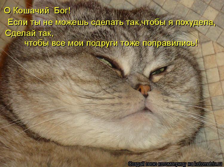 Котоматрица: Если ты не можешь сделать так, чтобы я похудела, Сделай так, чтобы все мои подруги тоже поправились! О Кошачий  Бог!