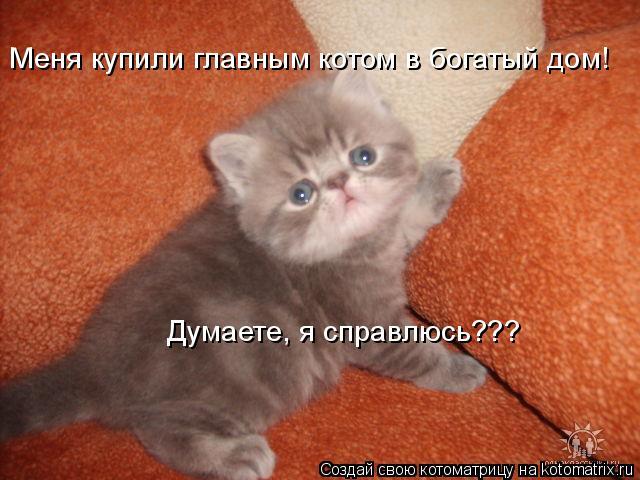 Котоматрица: Меня купили главным котом в богатый дом! Думаете, я справлюсь???