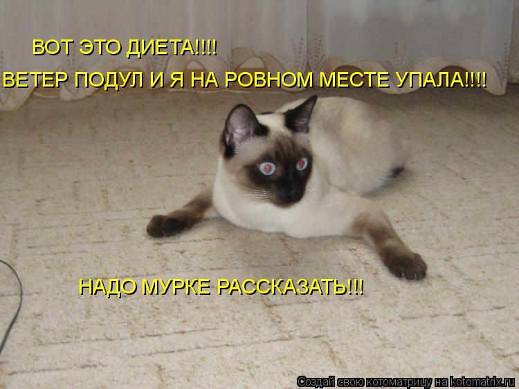 Котоматрица: ВОТ ЭТО ДИЕТА!!!! ВЕТЕР ПОДУЛ И Я НА РОВНОМ МЕСТЕ УПАЛА!!!! НАДО МУРКЕ РАССКАЗАТЬ!!!