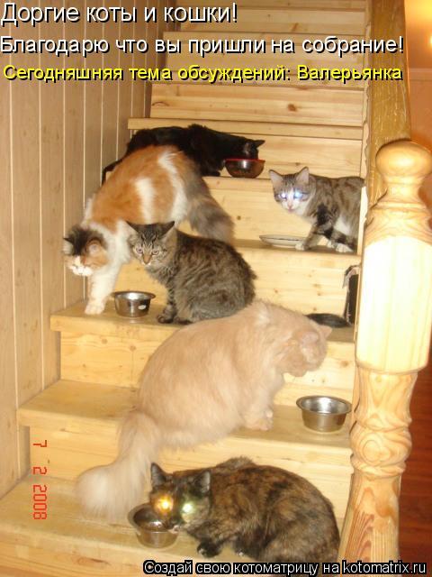 Котоматрица: Доргие коты и кошки! Благодарю что вы пришли на собрание! Сегодняшняя тема обсуждений: Валерьянка