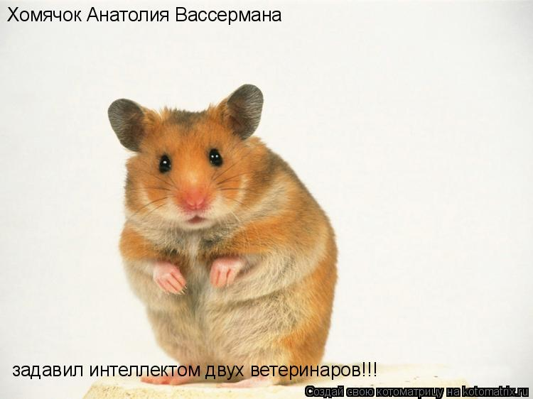 Котоматрица: Хомячок Анатолия Вассермана задавил интеллектом двух ветеринаров!!!