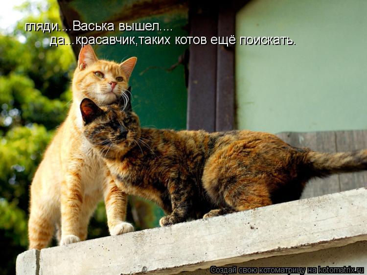 Котоматрица: гляди....Васька вышел.... да...красавчик,таких котов ещё поискать.
