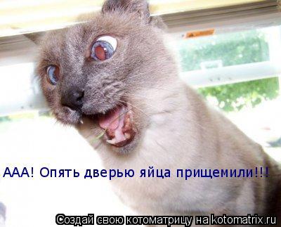 Котоматрица: ААА! Опять дверью яйца прищемили!!!