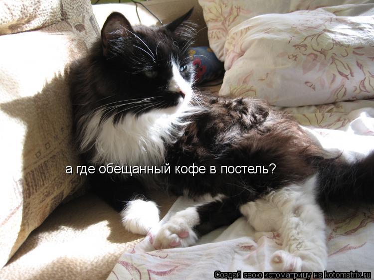 Котоматрица: а где обещанный кофе в постель?