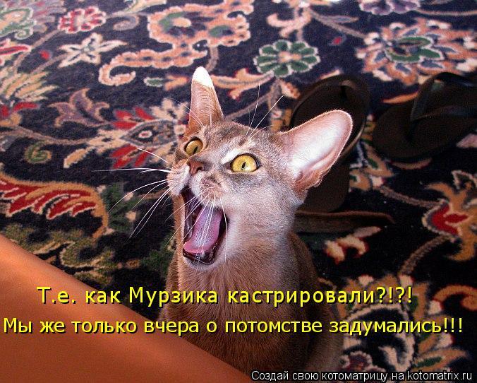 Котоматрица: Т.е. как Мурзика кастрировали?!?! Мы же только вчера о потомстве задумались!!!
