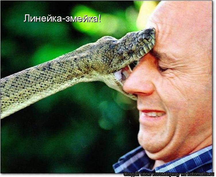 Котоматрица: Линейка-змейка!