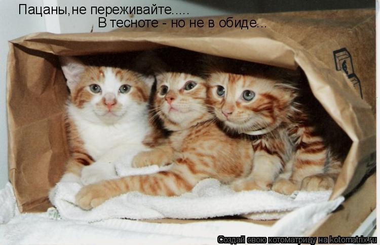 Котоматрица: Пацаны,не переживайте..... В тесноте - но не в обиде...