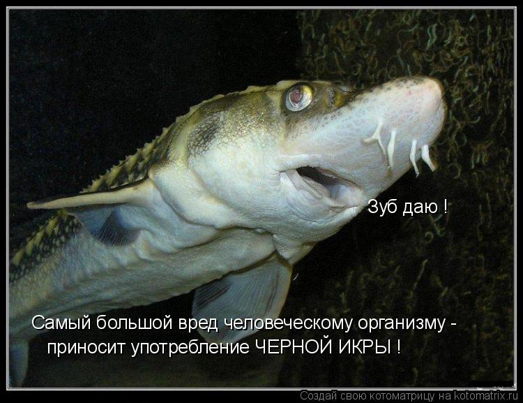 Котоматрица: Самый большой вред человеческому организму - приносит употребление ЧЕРНОЙ ИКРЫ ! Зуб даю !
