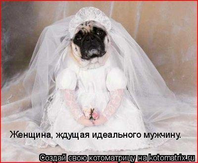 Котоматрица: Женщина, ждущая идеального мужчину.