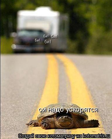 Котоматрица: ой надо ускорятся би! би! би! би!