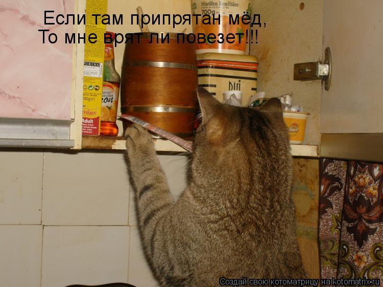Котоматрица: Если там припрятан мёд, То мне врят ли повезет!!!