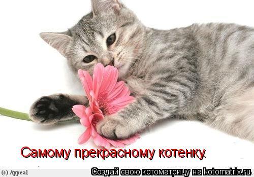 Котоматрица: Самому прекрасному котенку.