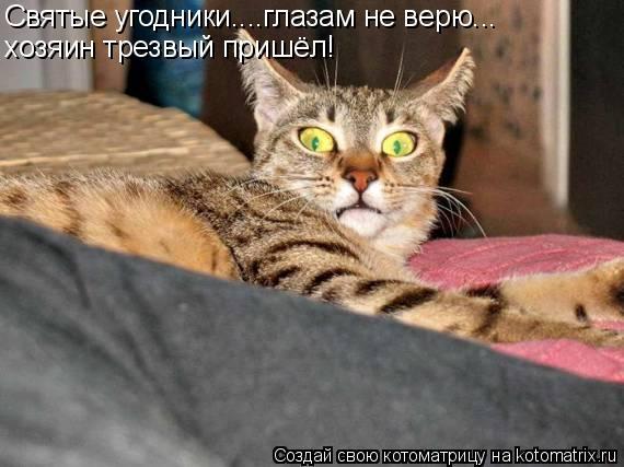 Котоматрица: Святые угодники....глазам не верю... хозяин трезвый пришёл!