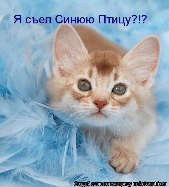 basik.ru - Животный мир - Домашние и не очень - фотография 1.
