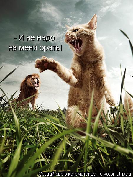 Котоматрица: - И не надо  на меня орать!