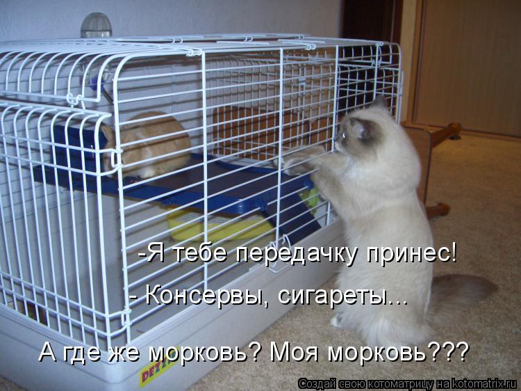 Котоматрица: -Я тебе передачку принес! - Консервы, сигареты...  А где же морковь? Моя морковь???