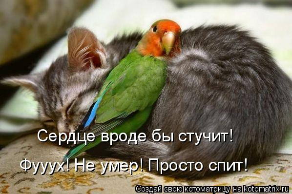 Котоматрица: Сердце вроде бы стучит! Фууух! Не умер! Просто спит!