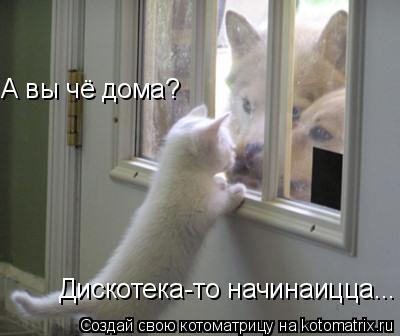 Котоматрица: А вы чё дома? Дискотека-то начинаицца...