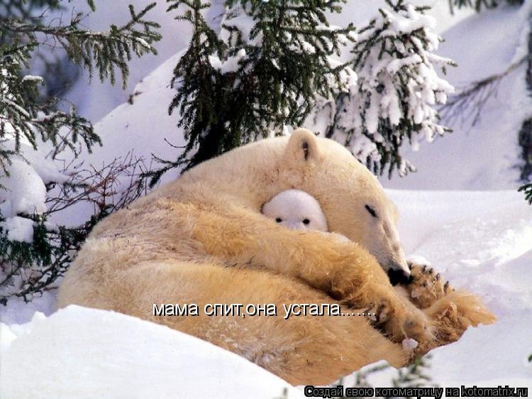 Котоматрица: мама спит,она устала.......