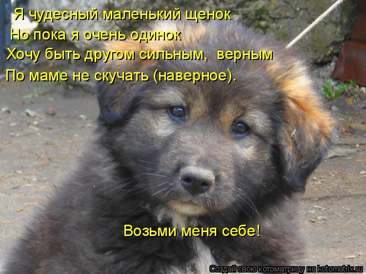 Котоматрица: Я чудесный маленький щенок Но пока я очень одинок Хочу быть другом сильным,  верным По маме не скучать (наверное)… Возьми меня себе!