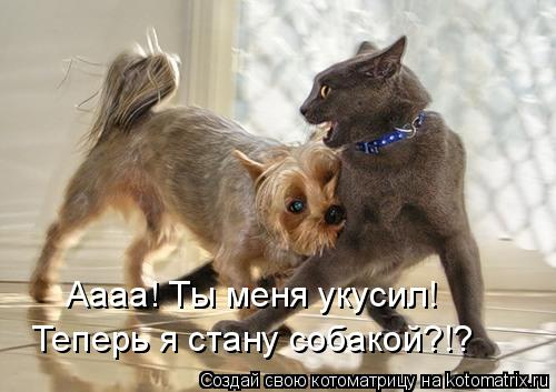 Котоматрица: Аааа! Ты меня укусил! Теперь я стану собакой?!?