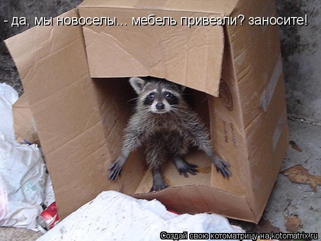 Котоматрица: - да, мы новоселы... мебель привезли? заносите!