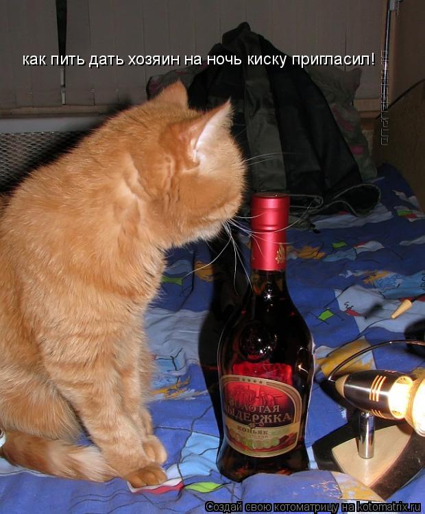 Котоматрица: как пить дать хозяин на ночь киску пригласил!