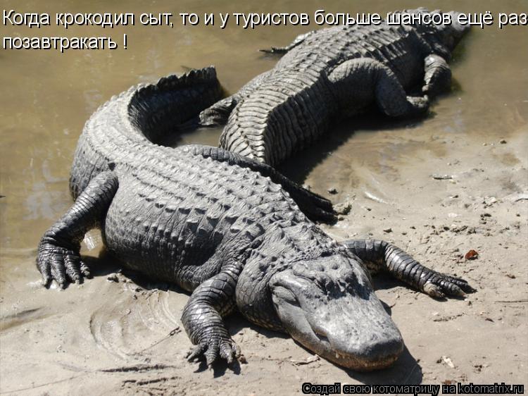Котоматрица: Когда крокодил сыт, то и у туристов больше шансов ещё раз позавтракать !
