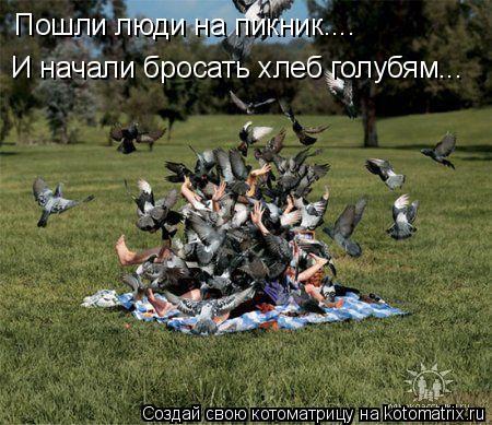 Котоматрица: Пошли люди на пикник.... И начали бросать хлеб голубям...