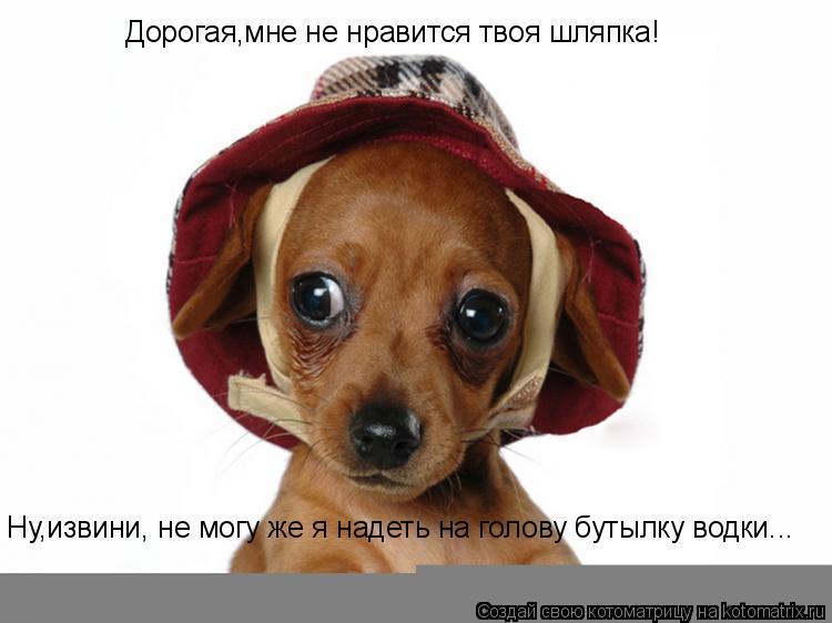 Котоматрица: Дорогая,мне не нравится твоя шляпка! Ну,извини, не могу же я надеть на голову бутылку водки...