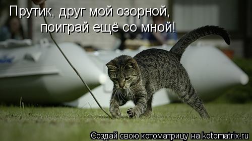 Котоматрица: Прутик, друг мой озорной, поиграй ещё со мной!
