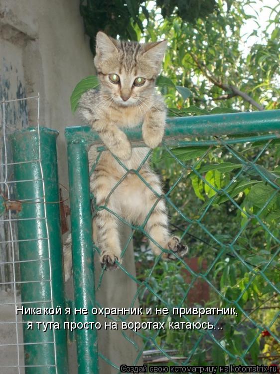 Котоматрица: Никакой я не охранник и не привратник, я тута просто на воротах катаюсь...