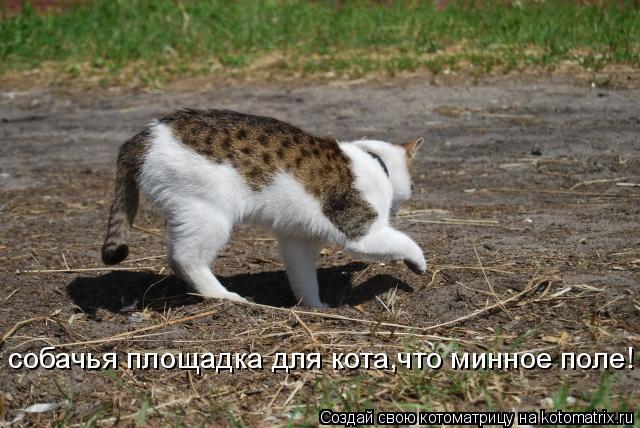 Котоматрица: собачья площадка для кота,что минное поле!