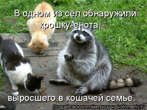 Котоматрица: В одном из сёл обнаружили крошку-енота, выросшего в кошачей семье.