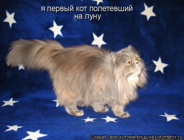 Котоматрица: я первый кот полетевший на луну