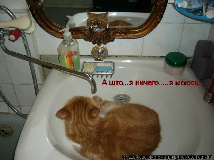 Котоматрица: А што...я ничего.....я моюсь.....