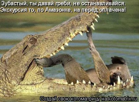 Котоматрица: Зубастый, ты давай греби, не останавливайся. Экскурсия то, по Амазонке, на перёд оплачена!
